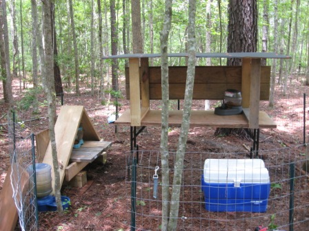 The cat station in the woods
