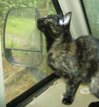 "Kitty Girl:  ""Hmmm, these windows need cleaning."""