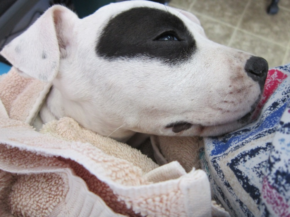 Puppy Parasite Prevention 101 (1/2)