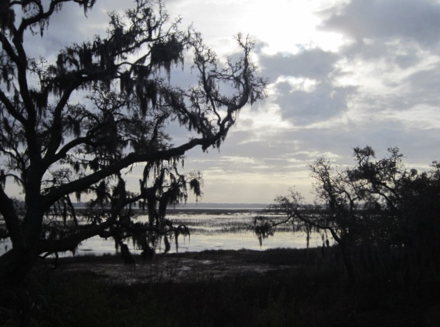 Live Oaks at the Marsh (1/6)