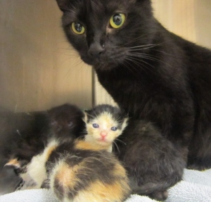 Mama & babies