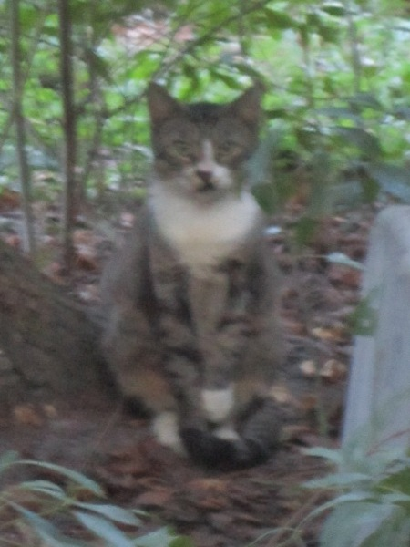 Under the trees, she holds her left paw off the ground.  Now I know why.